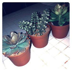 """🆕🏠 3"""" potted plastic succulent plant bundle (3)"""